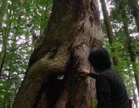 Trailer oficial de 'Viaje a Nara'