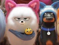 Clip exclusivo de la película 'Mascotas 2'